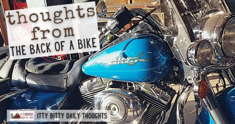 thoughts from the back of a bike (itty bitty thoughts)