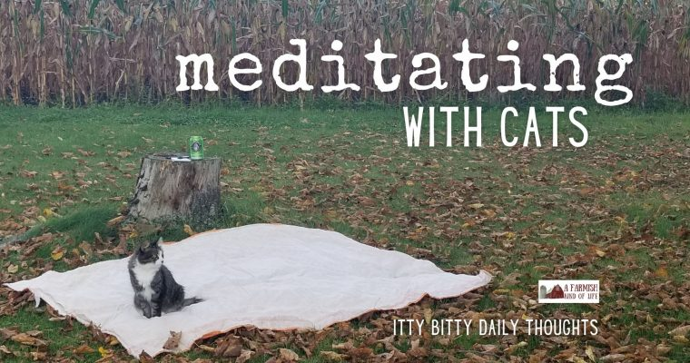 meditating…with cats (itty bitty thoughts)