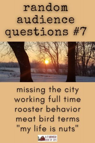 "Today I answer your questions about country living struggles, working full time, too many roosters, meat bird terminology, and ""when life is too crazy""."