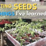 139: Starting Seeds – 11 Things I've Learned