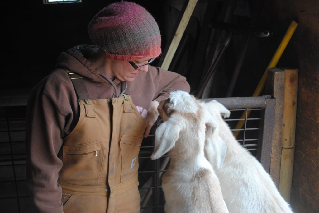 Two goats trying to get what is in the pocket of my overalls.